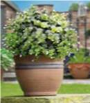 Искуственное растение Topiary Ball 30cm белые цветы