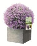 Искуственное растение Topiary Ball 30cm фиолетовая лаванда