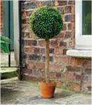 Искуственное растение Topiary Ball дерево 80cm