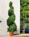 Искусственное растение Swirl Border 80cm кипарис
