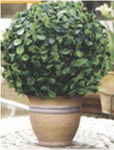 Искуственное растение Topiary Ball 15cm крупные листья