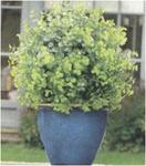 Искуственное растение Topiary Ball 30cm мелкие листья