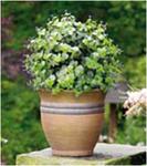 Искуственное растение Topiary Ball 30cm фиолетовые цветы